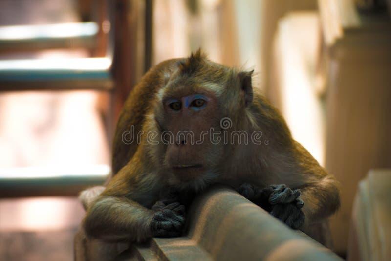 Μαϊμού μόνη στη μέση πόλη Ευτυχία στοκ φωτογραφία με δικαίωμα ελεύθερης χρήσης