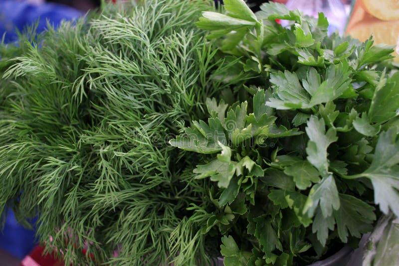 Μαϊντανός και άνηθος Φρέσκα, οργανικά, χορτάρια κήπων, άνηθου και μαϊντανού Πράσινες βιταμίνες detox Αρωματικά χορτάρια για τη σα στοκ εικόνες