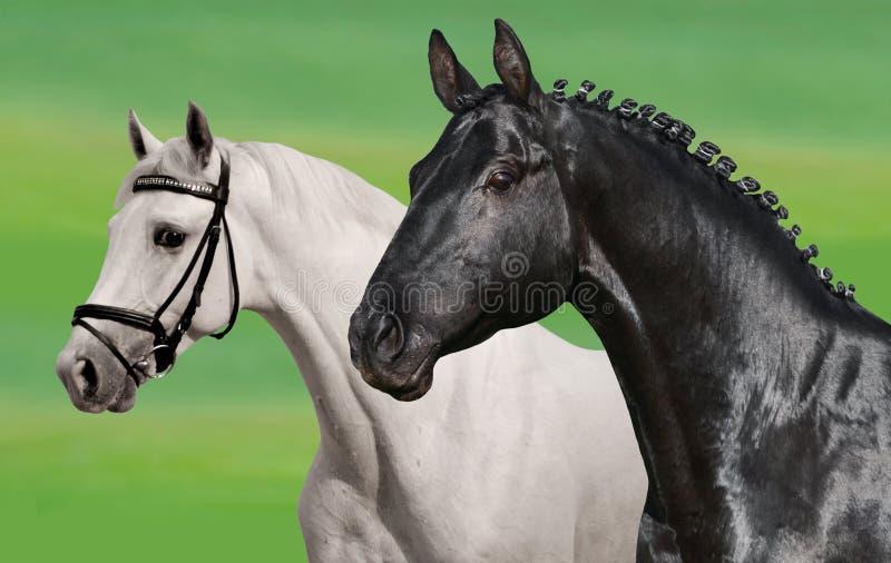 Μαύρα & άσπρα άλογα στοκ εικόνα με δικαίωμα ελεύθερης χρήσης