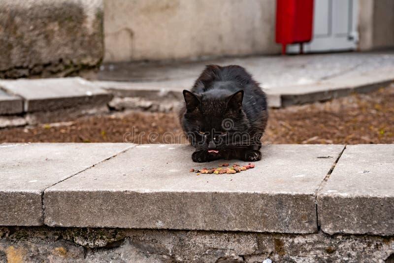 Μαύρα άστεγα γλειψίματα γατών στοκ εικόνες με δικαίωμα ελεύθερης χρήσης