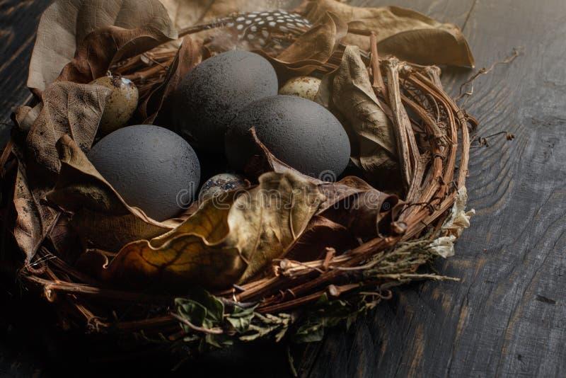 Μαύρα αυγά σε μια φωλιά των ξηρών κλάδων σε έναν μαύρο πίνακα Ύφος Πάσχας στοκ εικόνα