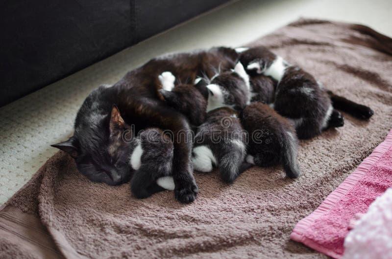 Μαύρα γάτα και γατάκια στοκ φωτογραφία