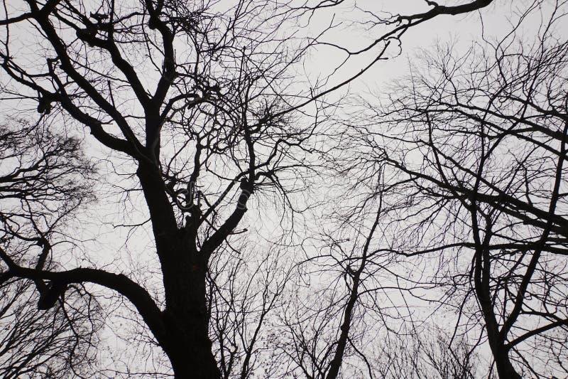 Μαύρα δέντρα στο γκρίζο υπόβαθρο στοκ εικόνες