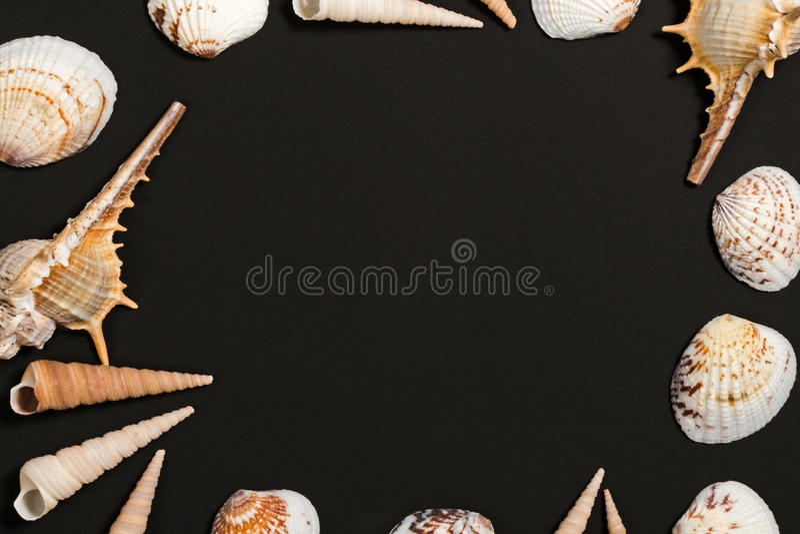 Μαύρα κοχύλια πινάκων και θάλασσας Ωκεάνειο πρότυπο προτύπων κοχυλιών στοκ φωτογραφία με δικαίωμα ελεύθερης χρήσης