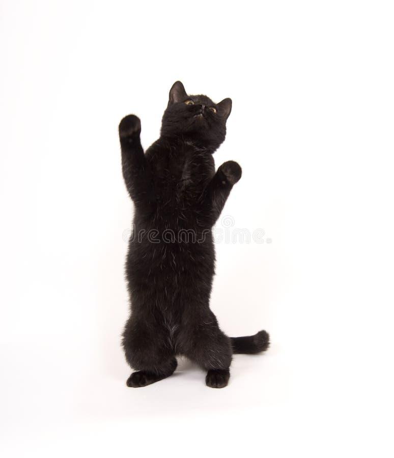μαύρα οπίσθια πόδια γατών στοκ φωτογραφίες