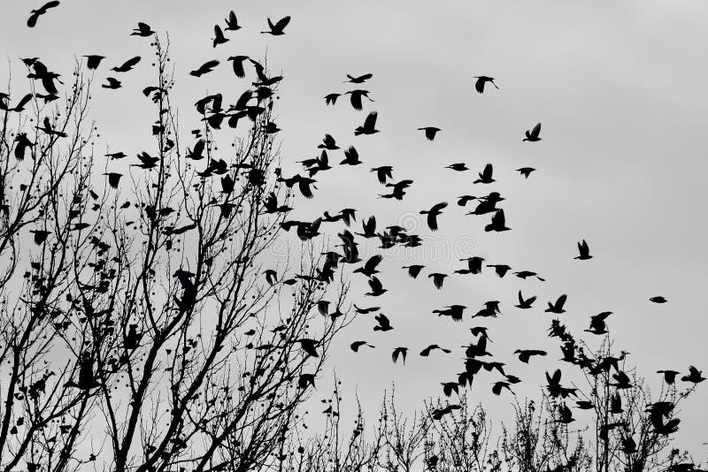 Μαύρα πουλιά στοκ φωτογραφία με δικαίωμα ελεύθερης χρήσης