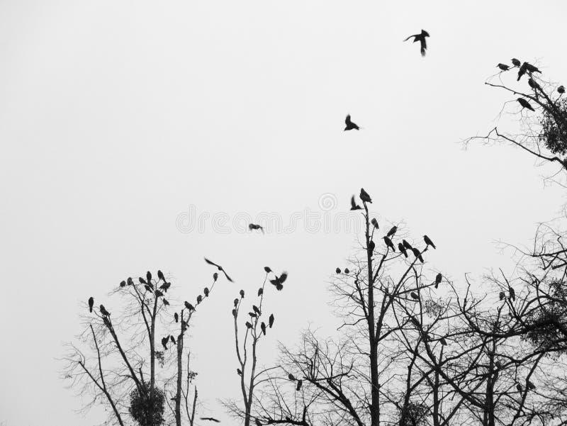 Μαύρα πουλιά στοκ εικόνα