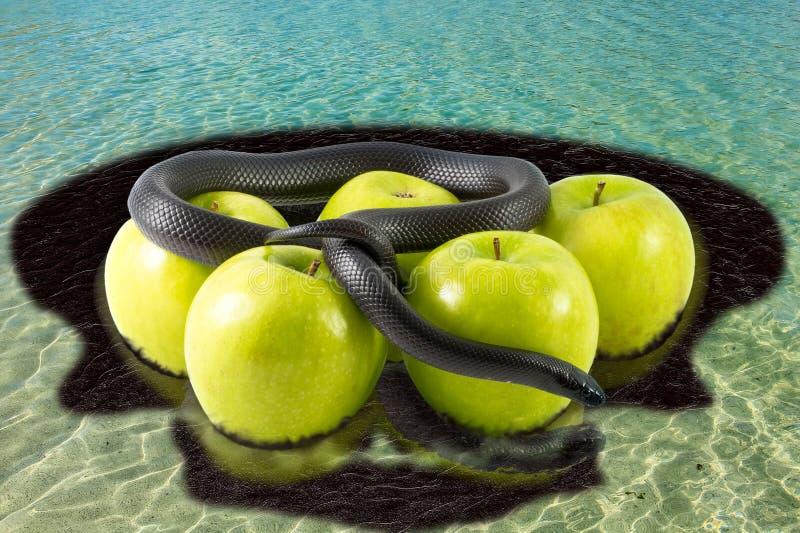 Μαύρα φίδι και μήλα στην τροπική θάλασσα μολυσμένη στοκ εικόνες