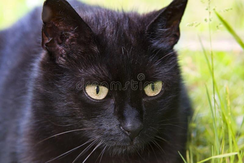 μαύρες γάτες στοκ φωτογραφία