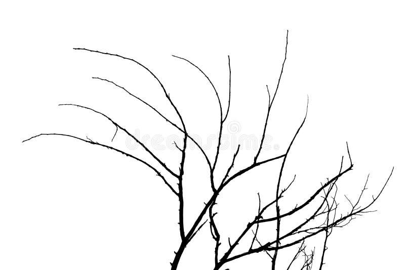 Μαύρες σκιαγραφίες κλάδων που απομονώνονται στο άσπρο υπόβαθρο χρήσιμο για το ψηφιακό σχέδιο έργου τέχνης ή παραγωγή των βουρτσών στοκ φωτογραφία με δικαίωμα ελεύθερης χρήσης
