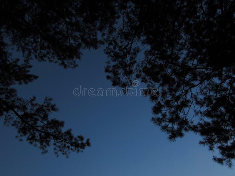 Μαύρες σκιαγραφίες των δέντρων και ενός κλάδου στο αριστερό ενάντια στο σκούρο μπλε ουρανό βραδιού σε ένα πάρκο στοκ φωτογραφία με δικαίωμα ελεύθερης χρήσης
