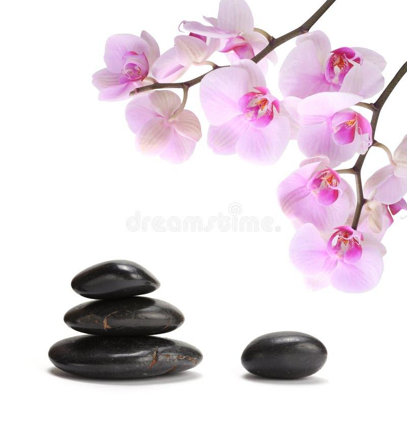 μαύρες orchid ρόδινες πέτρες στοκ εικόνα με δικαίωμα ελεύθερης χρήσης