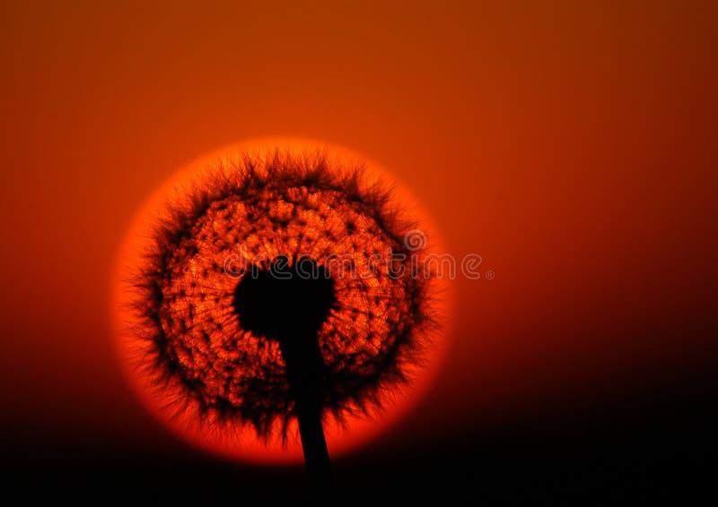 μαύρη απεικόνιση έκλειψης σχεδίου ανασκόπησης ηλιακή στοκ εικόνα με δικαίωμα ελεύθερης χρήσης