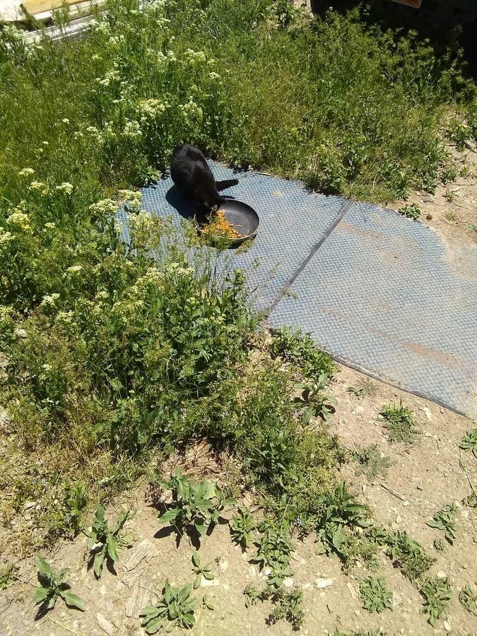 Μαύρη γάτα δύο που τρώει τα τρόφιμα στοκ φωτογραφία