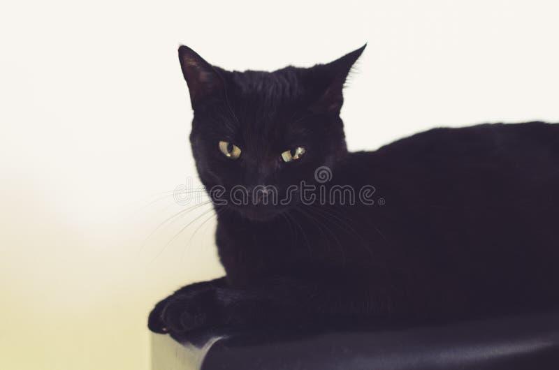 Μαύρη γάτα, ζωικό πορτρέτο στοκ φωτογραφίες με δικαίωμα ελεύθερης χρήσης