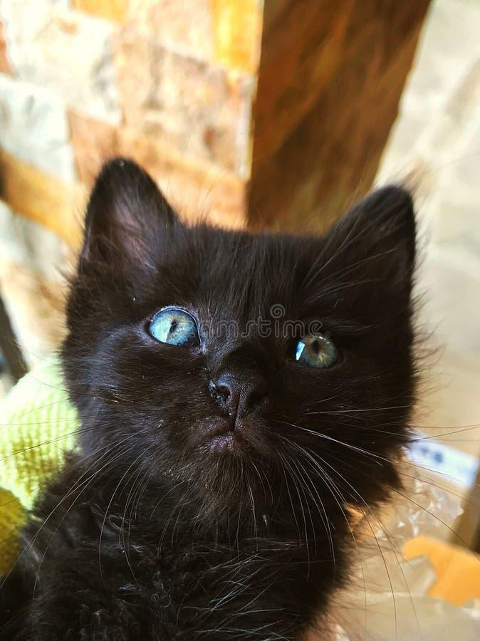 Μαύρη γάτα με τα βαθιά μπλε μάτια στοκ φωτογραφίες
