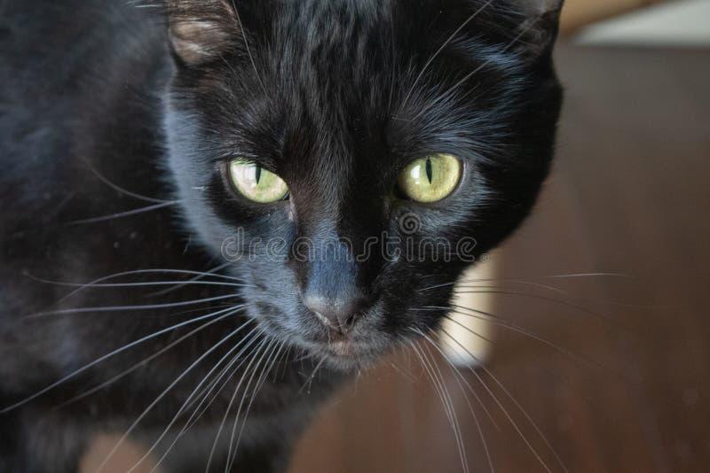 Μαύρη γάτα με τα κίτρινα μάτια στοκ φωτογραφίες με δικαίωμα ελεύθερης χρήσης
