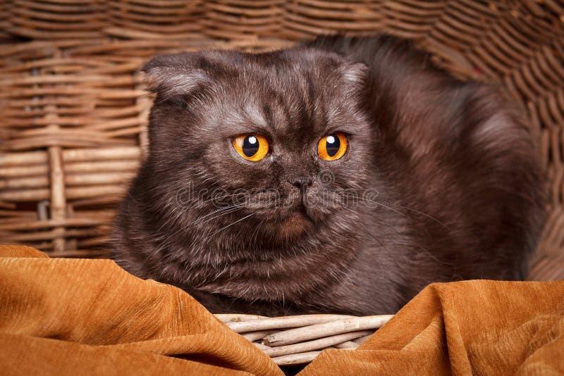 Μαύρη γάτα με τα κίτρινα μάτια που κάθονται σε ένα baske στοκ φωτογραφία με δικαίωμα ελεύθερης χρήσης