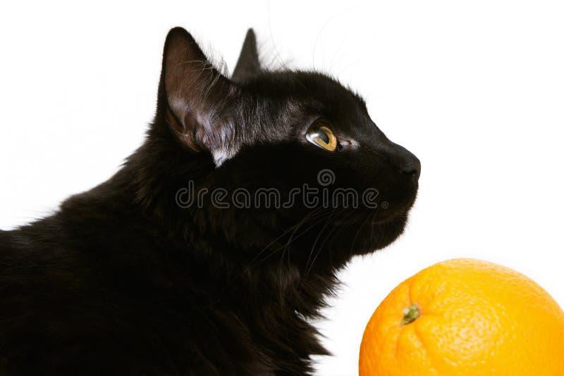 Μαύρη γάτα με το πορτοκάλι στο άσπρο υπόβαθρο στοκ φωτογραφία με δικαίωμα ελεύθερης χρήσης