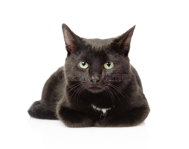 Μαύρη γάτα που βρίσκεται σε μπροστινό και που εξετάζει τη κάμερα απομονωμένος στοκ φωτογραφία με δικαίωμα ελεύθερης χρήσης