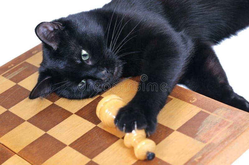 Μαύρη γάτα που βρίσκεται στο παιχνίδι σκακιερών με τους αριθμούς στοκ φωτογραφίες με δικαίωμα ελεύθερης χρήσης