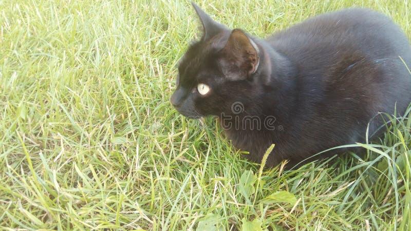Μαύρη γάτα που χαλαρώνει έξω τη δευτερεύουσα συνεδρίαση στη χλόη στοκ εικόνες