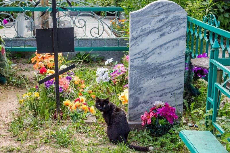 Μαύρη γάτα σε ένα χριστιανικό νεκροταφείο κοντά στους τάφους στοκ φωτογραφία