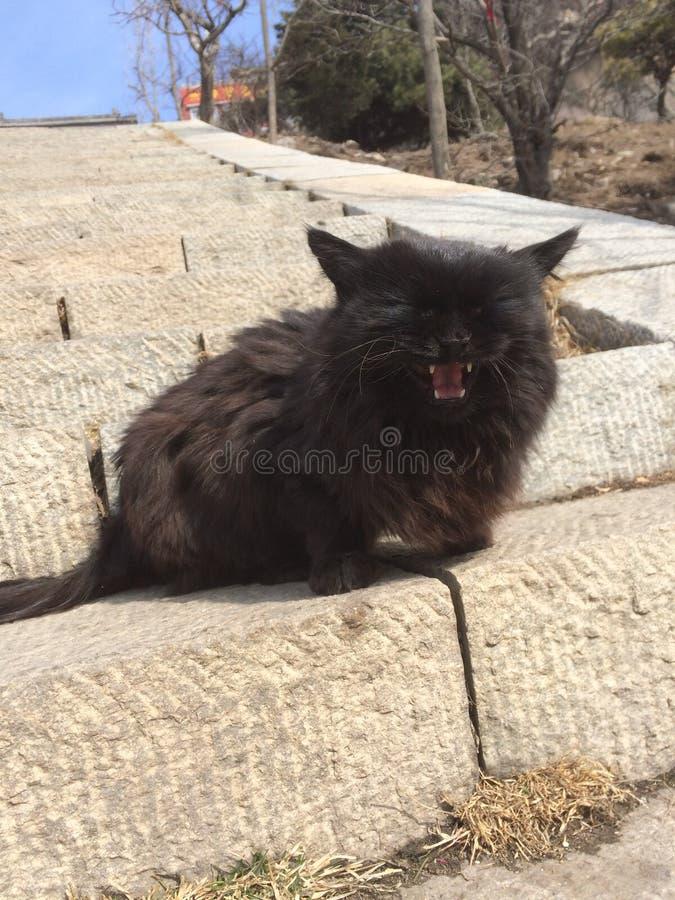 Μαύρη γάτα σε Taishan στοκ φωτογραφίες με δικαίωμα ελεύθερης χρήσης