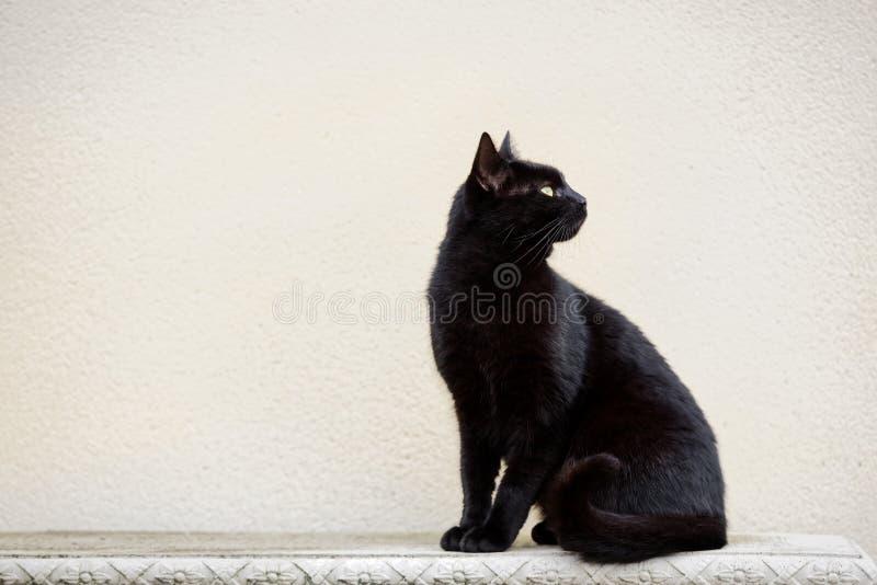Μαύρη γάτα στον περίκομψο πάγκο στοκ εικόνα