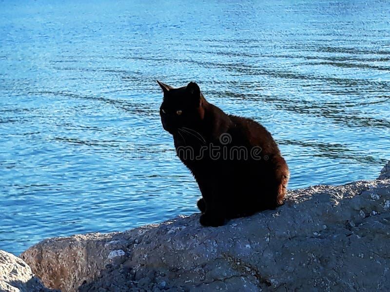 Μαύρη γάτα στους βράχους της παραλίας στοκ εικόνα