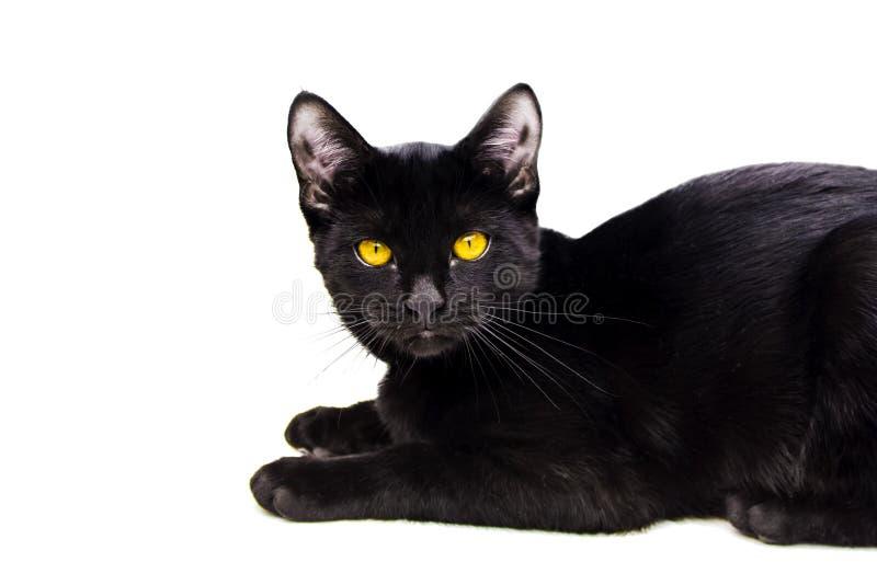 Μαύρη γάτα στο απομονωμένο άσπρο υπόβαθρο στοκ φωτογραφία