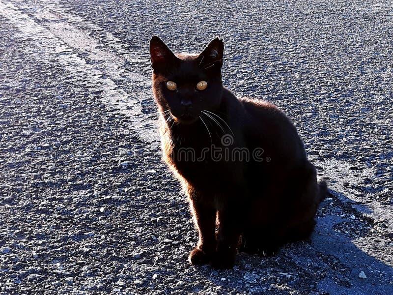Μαύρη γάτα στο δρόμο στοκ φωτογραφία με δικαίωμα ελεύθερης χρήσης