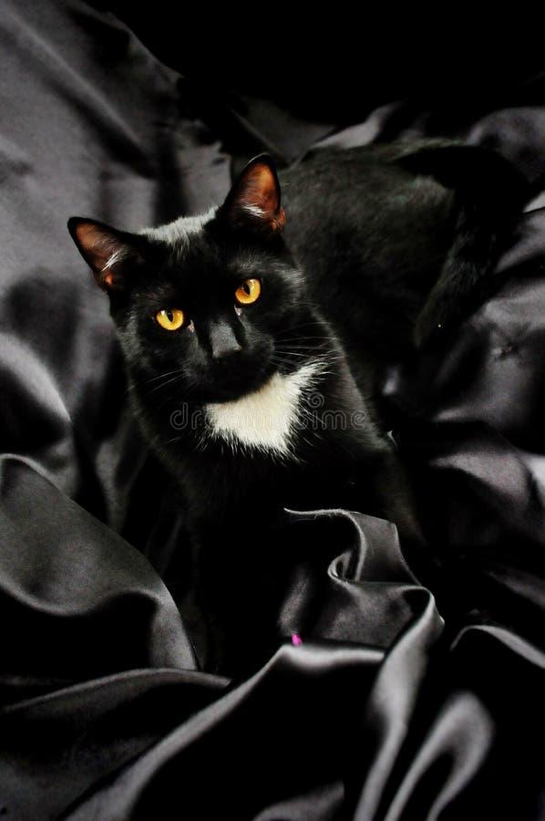 Μαύρη γάτα στο σατέν στοκ φωτογραφία