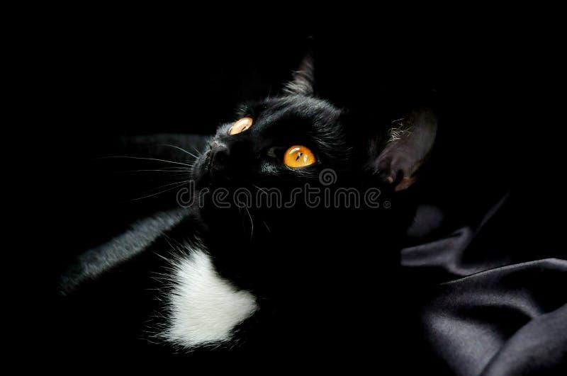 Μαύρη γάτα στο σατέν στοκ εικόνα με δικαίωμα ελεύθερης χρήσης