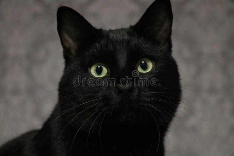 μαύρη γάτα Marsik στοκ φωτογραφία