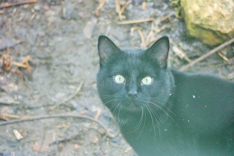 μαύρη γάτα marsik, στοκ εικόνες με δικαίωμα ελεύθερης χρήσης