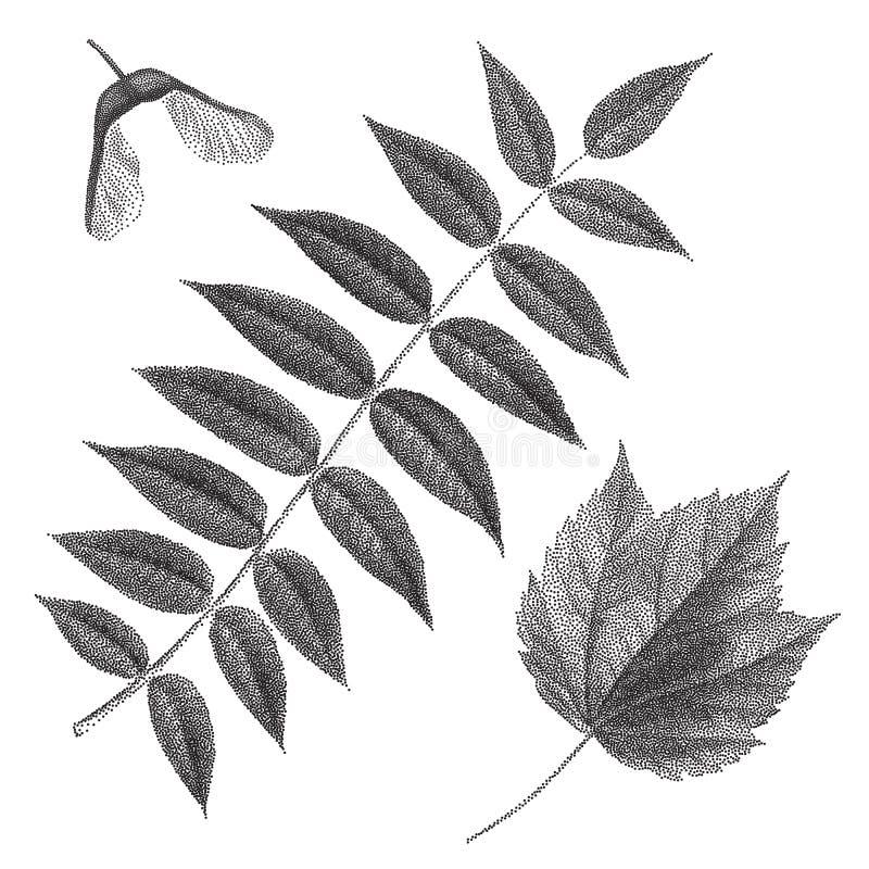 Μαύρη εκλεκτής ποιότητας χάραξη της σορβιάς και των φύλλων σφενδάμου ελεύθερη απεικόνιση δικαιώματος