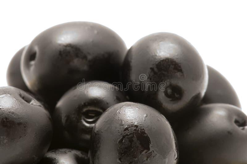 μαύρη ελιά στοκ φωτογραφίες με δικαίωμα ελεύθερης χρήσης