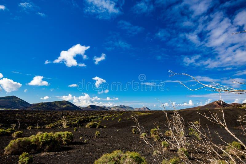 Μαύρη ηφαιστειακή έρημος Lanzarote και νεκρό δέντρο στοκ εικόνα με δικαίωμα ελεύθερης χρήσης