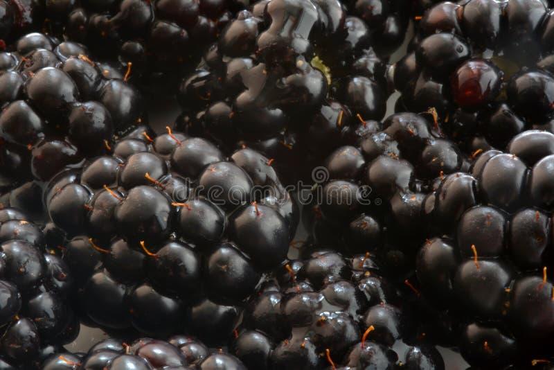 Μαύρη κινηματογράφηση σε πρώτο πλάνο του Blackberry στοκ εικόνες