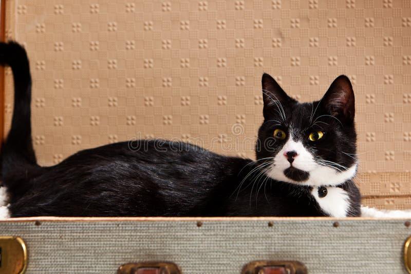 Μαύρη λευκή γάτα ξαπλωμένη βαλίτσα στοκ φωτογραφία με δικαίωμα ελεύθερης χρήσης