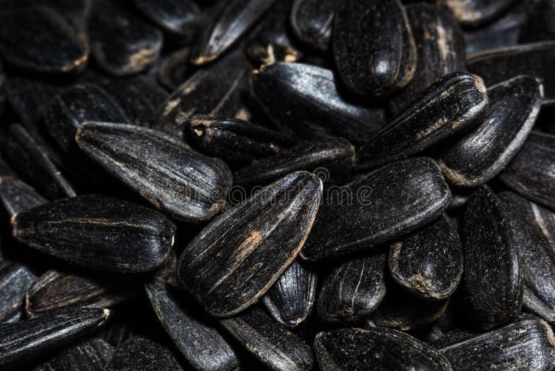 Μαύρη μακροεντολή σπόρων ηλίανθων στοκ εικόνες