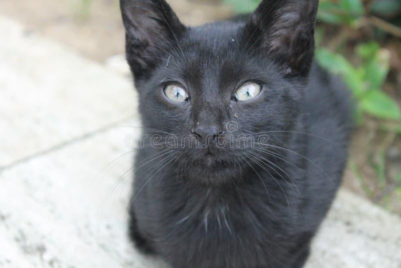 Μαύρη μπλε-eyed γάτα στοκ εικόνα