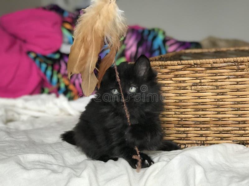 Μαύρη ομορφιά στοκ εικόνες με δικαίωμα ελεύθερης χρήσης