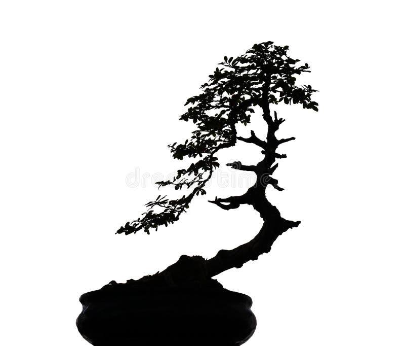 Μαύρη σκιαγραφία δέντρων μπονσάι φύσης που απομονώνεται στο άσπρο υπόβαθρο με το ψαλίδισμα της πορείας στοκ εικόνες