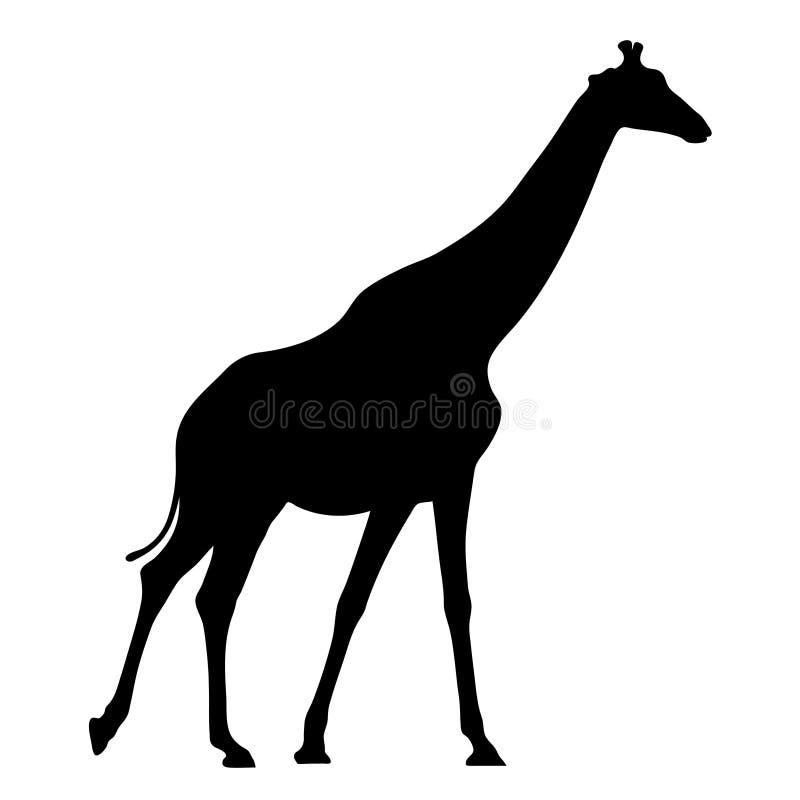 Μαύρη σκιαγραφία giraffe στην άσπρη διανυσματική απεικόνιση υποβάθρου διανυσματική απεικόνιση