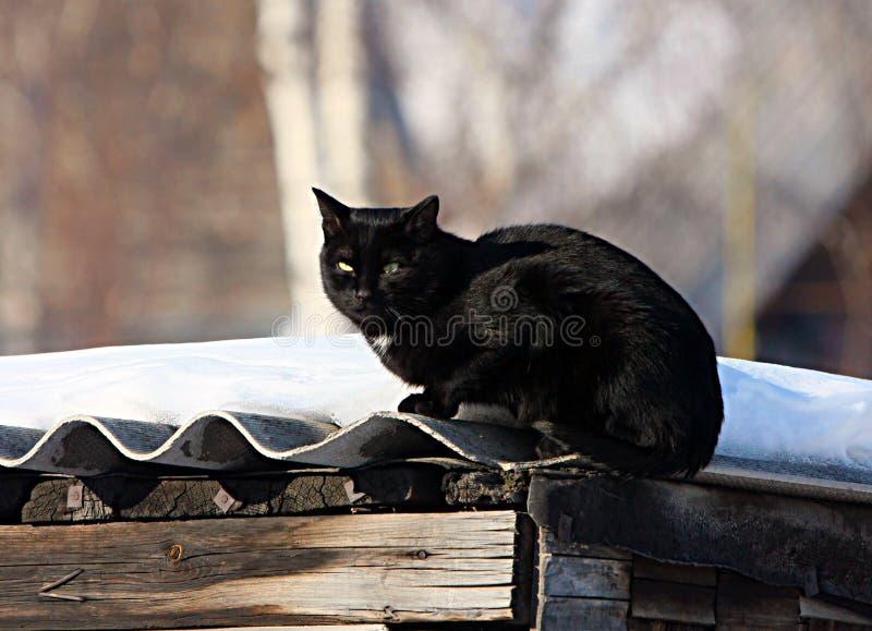 Μαύρη συνεδρίαση γατών στη στέγη του υπόστεγου στοκ εικόνες με δικαίωμα ελεύθερης χρήσης