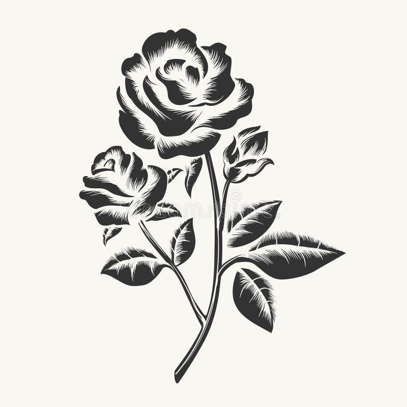 Μαύρη συρμένη χέρι χάραξη τριαντάφυλλων απεικόνιση αποθεμάτων