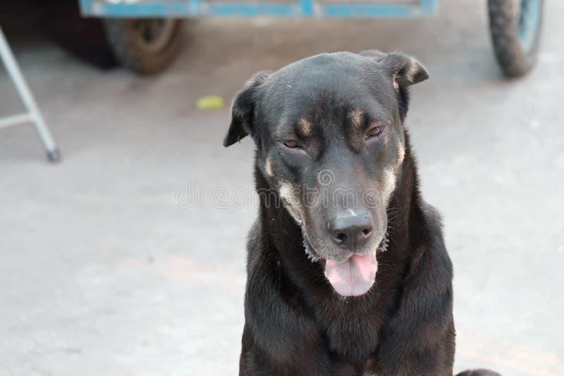 Μαύρη ταϊλανδική συνεδρίαση σκυλιών στο ισόγειο στην αγορά με μια γλώσσα έξω και θολωμένος μια ρόδα οχημάτων στοκ εικόνα