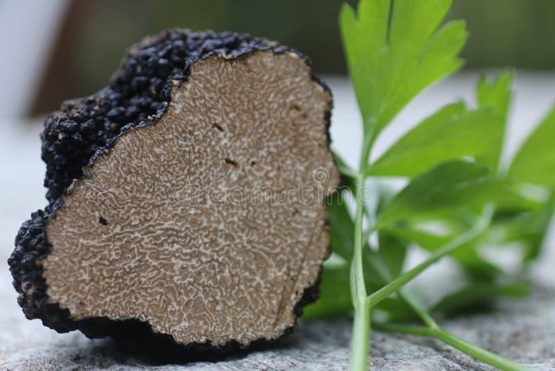 μαύρη τρούφα στοκ εικόνες